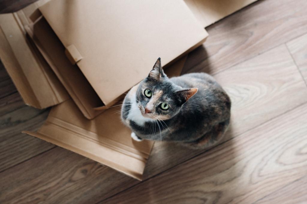 faire ses cartons chat