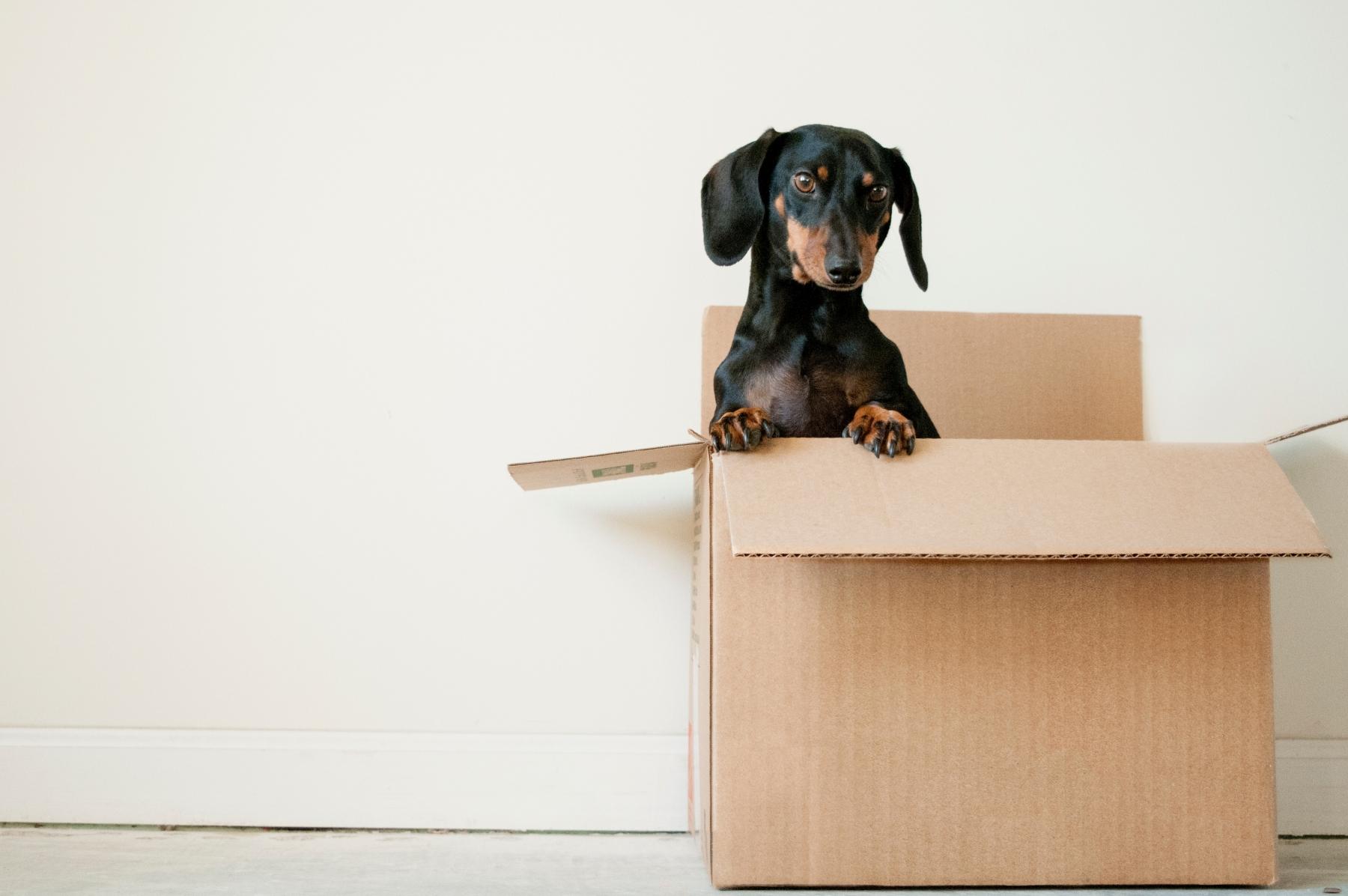 déménagement sans stress